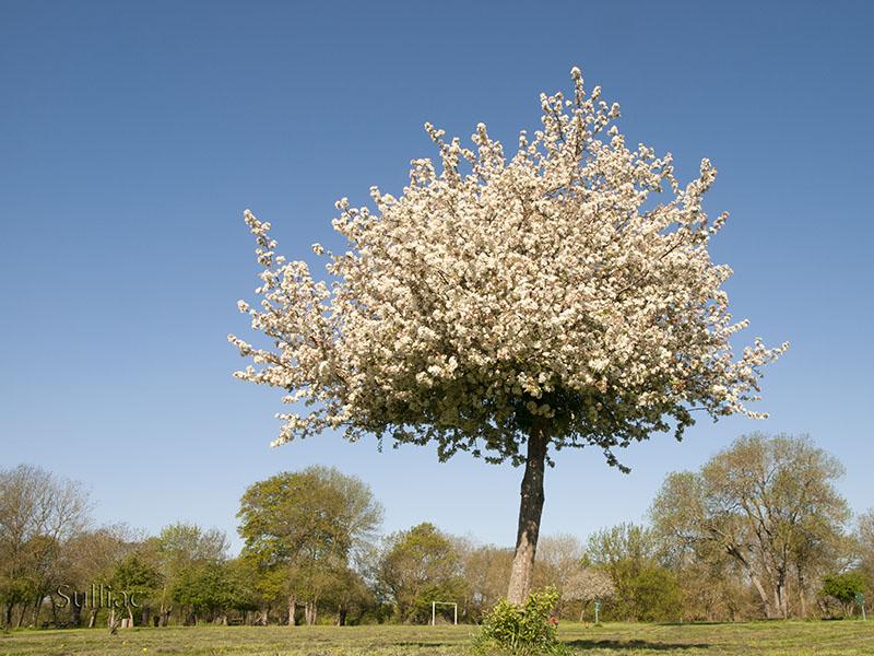 Petite fleur cherche une place dans un arbre  ----   +1 retouche Arbre_Fleur