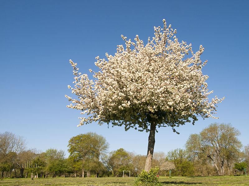 Petite fleur cherche une place dans un arbre  ----   +1 retouche Arbre_Fleur_2