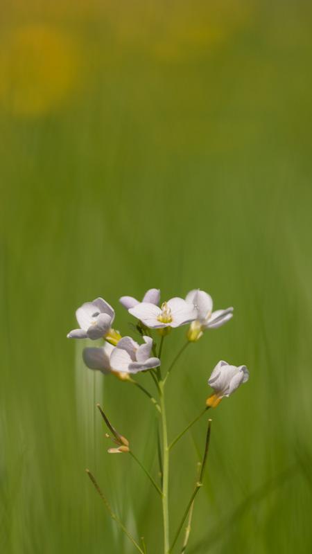 Petite fleur blanche + 3 recadrages ! P4251867-2
