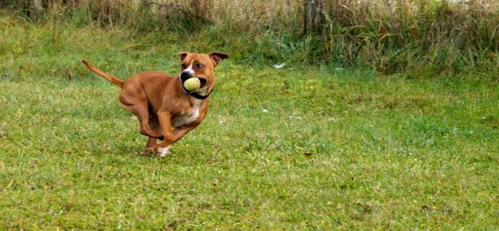 chiens et essai du 50-200 Dog_210
